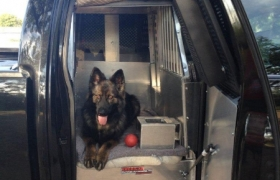 young-county-k9-2
