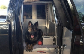 young-county-k9-20